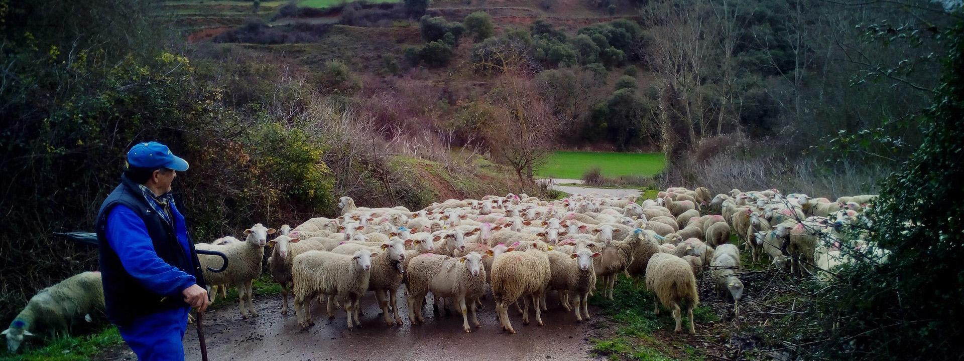 Agricultores y ganaderos locales