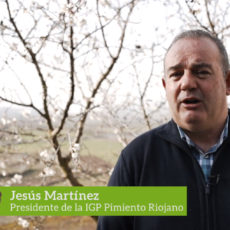 Jesús Martínez, Presidente de la IGP Pimiento Riojano, relata las formas de comercialización de este producto.